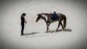 CONVENTIONAL HORSE TRAINING VS RELATIONSHIP-BASED HORSEMANSHIP