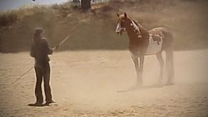 5 ROLES OF RELATIONSHIP-BASED HORSEMANSHIP