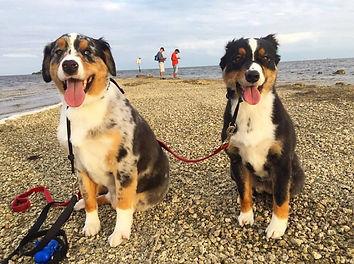 Dog Walker Cutler Bay Palmetto Bay Kendall