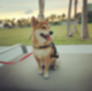 Dog Walker Coconut Grove, Dog Boarding Coconut Grove
