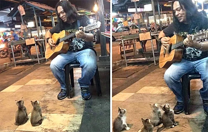 Everyone else ignored this street singer but not those music loving kitties!