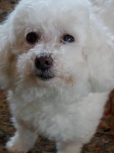 My Puppy