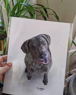 Pet Portrait ready to ship!