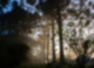 2_ambientes_paisagem13.jpg