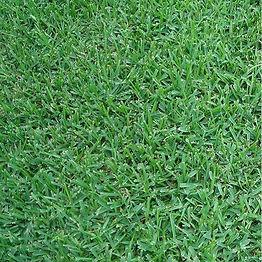 Raleigh St Augustine Grass.jpeg