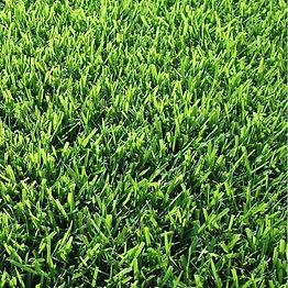 Zoysia Grass.jpeg