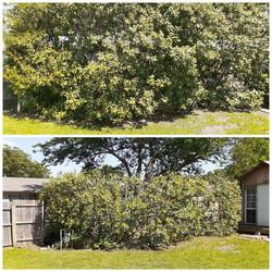 Bush/Hedge Trimming
