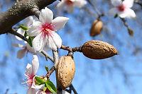 קניית עצי פרי - השקעה לשנים קדימה
