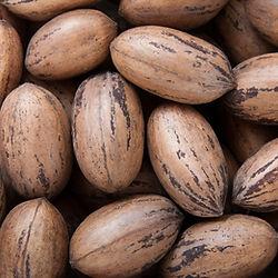 משתלת עצי פרי אגוזיים