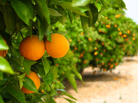 פירות בחמישה צבעים לחיים בריאים