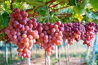 קניית עצי פרי לגינה