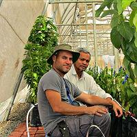 הקמת משתלה יצרנית לגידול שתילי אבוקדו בהודו