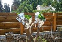 הרכבות עצי פרי לגינות פרטיות