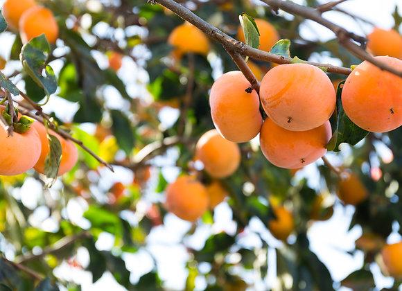 עץ אפרסמון