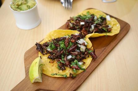 Alternative proteins: the delicious grasshopper taco