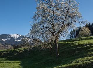 Frühling am Samerberg