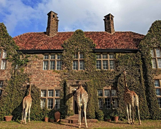 Giraffe Mannor