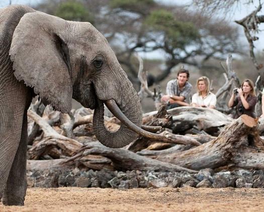 Elephants Galore!