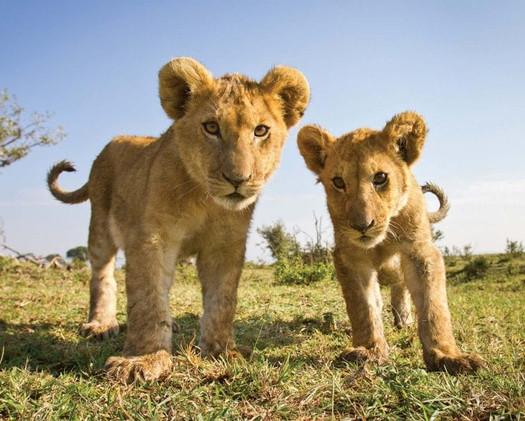 Cubs!