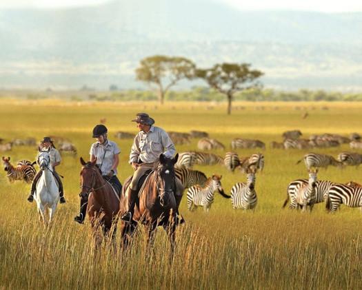 Horseback Riding - along side zebras - Custom Excursion*