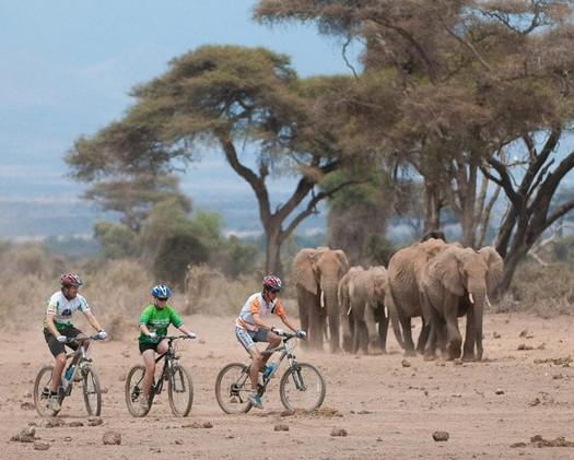 Biking on the Savanna