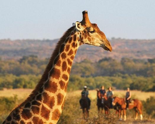 Kenia Horseback excursion