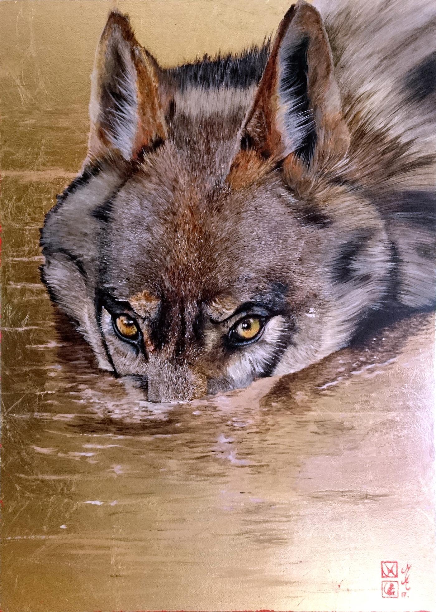 Loup entrant dans l'eau