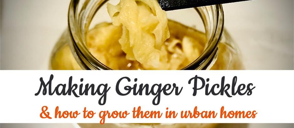 Making ginger pickles from homegrown ginger