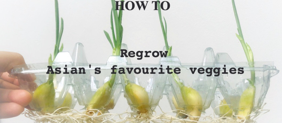 How to regrow endless vegetables in urban homes with limited space