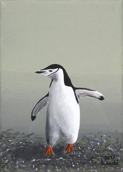 Pinguintriologie 1.3 (Zügelpinguin)