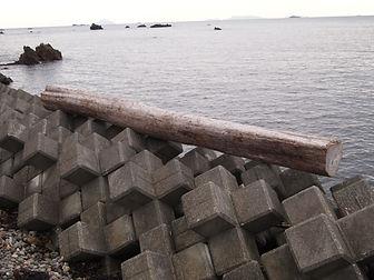 台風の後に、南伊豆赤穂浦に打ち上げられた丸太