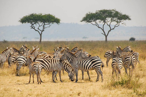TANZANIA 7 NIGHTS/8 DAYS LUXURY SAFARI ITINERARY