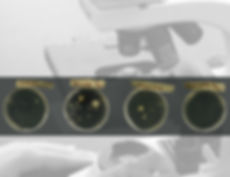 bacteria background2 edited.jpg