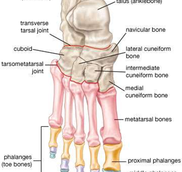 Copy of What is Chronic Ankle Instability(CAI)
