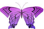 butterfly-533920_1920.jpg