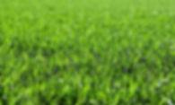 grass image .jpg