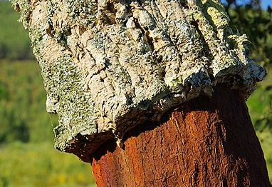 tree-cork.png