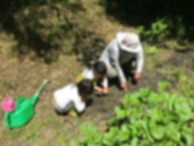 自然農の畑や田んぼ