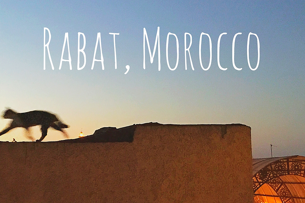 A cat on a roof. Rabat, Morocco