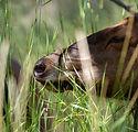 Wild_Elk-89.jpg