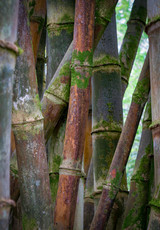 Bamboo View