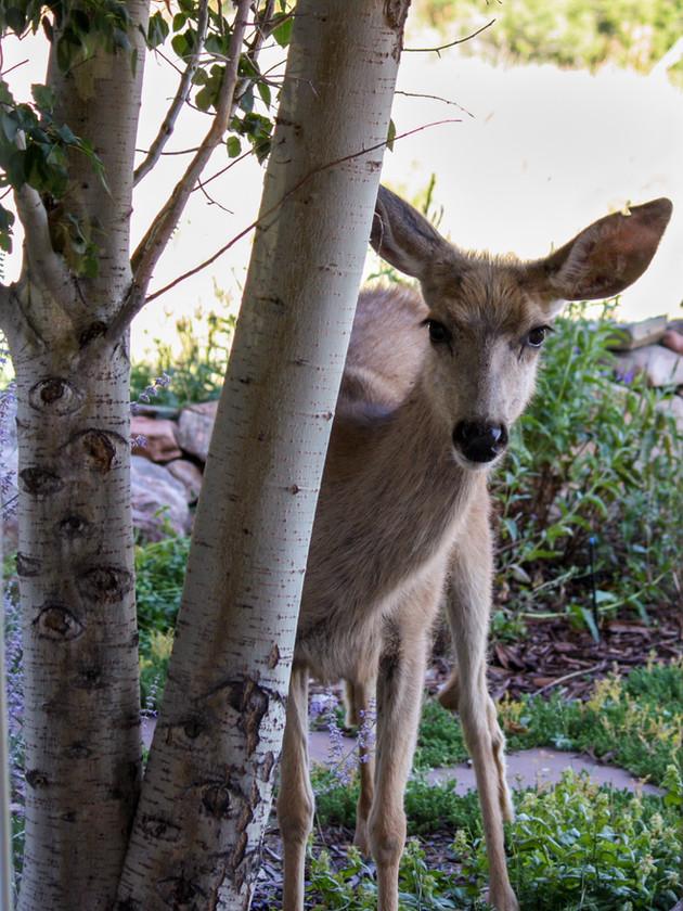 Wild Neighbors