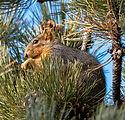 squirrel-2128.jpg