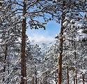 Heart of Evergreen Colorado