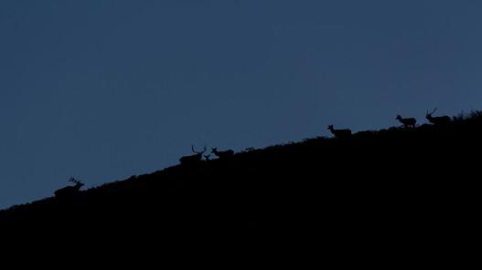 Bulls in the Sky