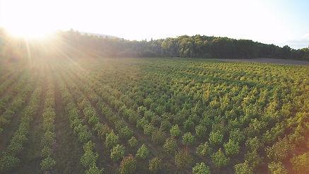 plants overhead with sunset.jpg