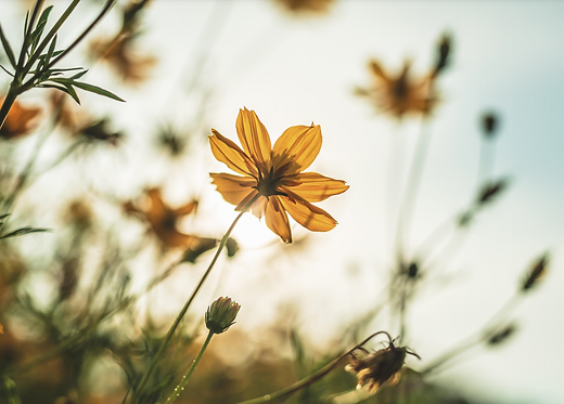 Жовті квіти