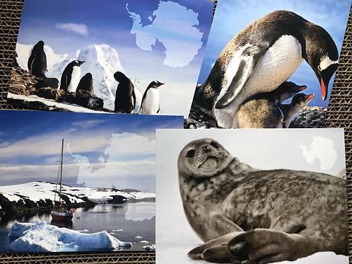 Екслюзивний набір з 4-х листівок. Антарктида