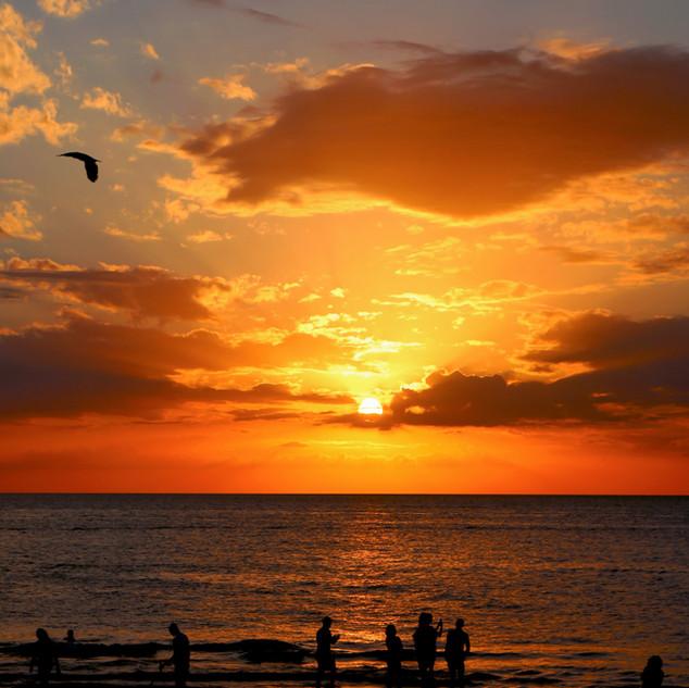 backlit-beach-dawn-221407.jpg
