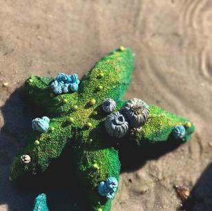 Starfish detail